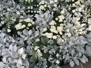 Wintery white display of kalanchoe, bigleaf hydrangea 'Hanabi', and dusty miller suggests snowflake patterns.